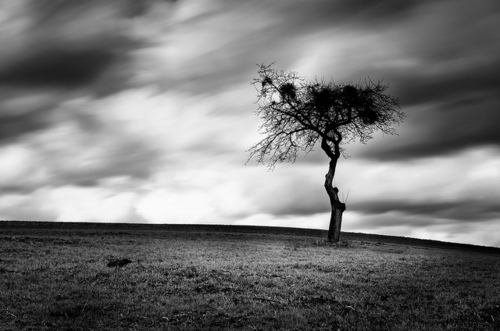 Empty Tree