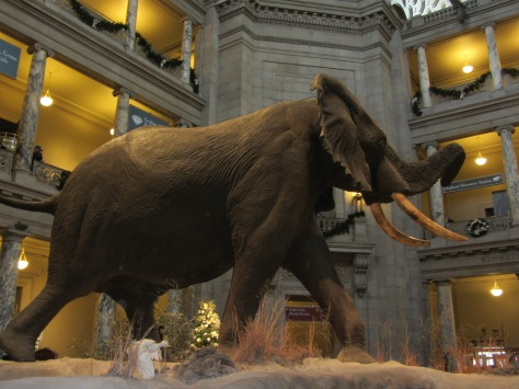 The impressive elephant in the Rotunda of the Natural History Museum