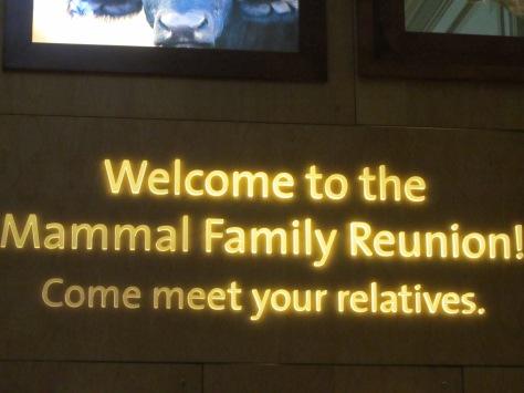 Why visit the Mammals exhibit?