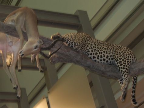 One of the 270 plus mammals on display