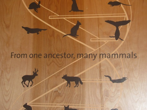 Our common origins