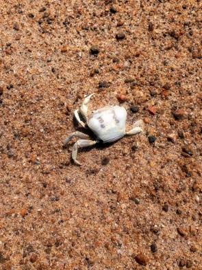 Crab bones.