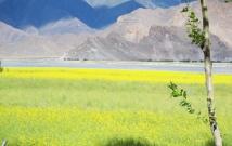 Lhasa Nature 10